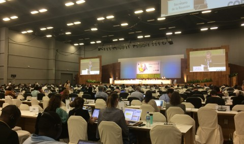 Inside the International Convention of Biological Diversity